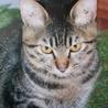 猫同士仲良くできる、世話焼きの可愛い子です