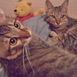 FIPにより家族の半分を失った子猫のお話、、その3