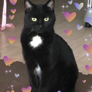 3歳位 胸元が白くて可愛い 黒猫美月ちゃん!