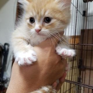 可愛い元気いっぱいの長毛子猫