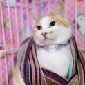 おとなしくて可愛いい 三毛猫のかなこちゃん♪