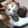 おとなしくて可愛いい 三毛猫のかなこちゃん♪ サムネイル3