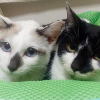 かぎしっぽの姉妹猫
