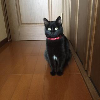 とっても美人さんの黒猫です!人馴れ修行中