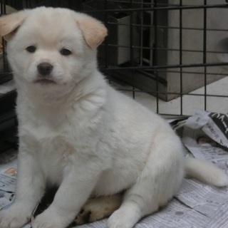 【保健所収容】好奇心旺盛な子犬です❗️