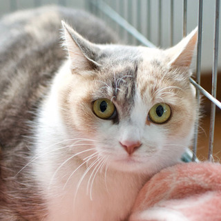 フワフワ美人の三毛猫ちゃん