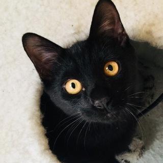 胸きゅんに優しい黒猫☆くう太