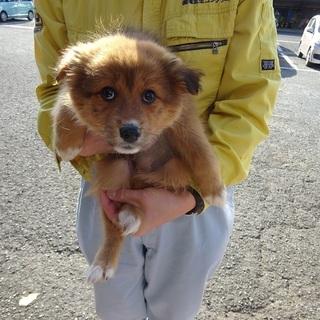 緊急募集!!モフモフ系2カ月の姉妹子犬たち