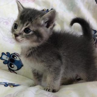 生後2カ月子猫 〆ます。