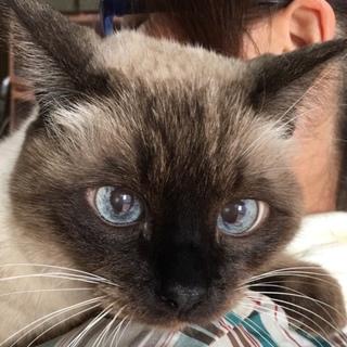 トライアル中です。里親急募の老猫ジャム君