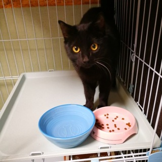 ゴロゴロ甘えん坊の黒猫★まらない