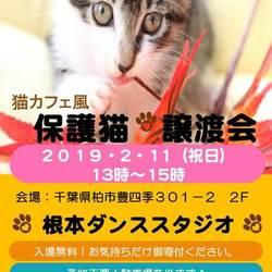 猫の日間近 猫カフェ風保護猫譲渡会