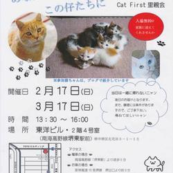「Cat First 里親会」