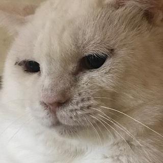 ツンデレ猫のもくれん君
