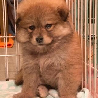 M17:フワモコ子犬ちゃん