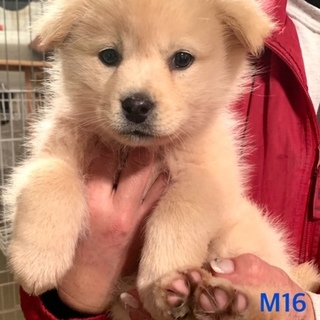 M16:フワフワ子犬ちゃん