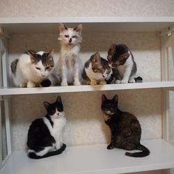『ふれあい』 猫の里親会(お申し込み制)
