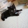 決定☆綺麗な黒猫の遊ぶの大好き子 サムネイル4