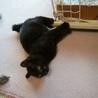 決定☆綺麗な黒猫の遊ぶの大好き子 サムネイル5
