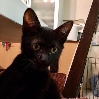 真っ黒でない黒猫くんです。