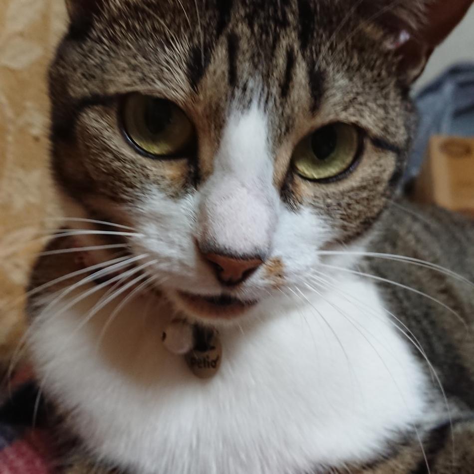 MIUのカバー写真