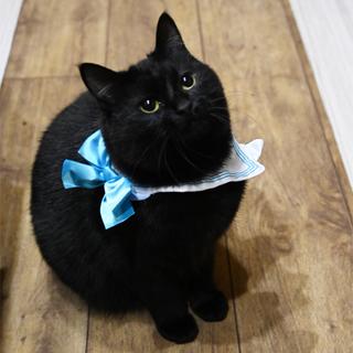 ふっくら丸マルした黒猫くん