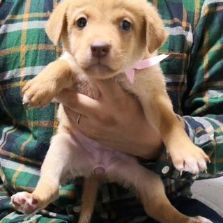中型 子犬 ピンクちゃん