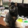 大きな手術を乗り越えた美人サビ猫ちゃんです! サムネイル2