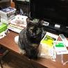 大きな手術を乗り越えた美人サビ猫ちゃんです! サムネイル3