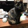 大きな手術を乗り越えた美人サビ猫ちゃんです! サムネイル4