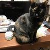 大きな手術を乗り越えた美人サビ猫ちゃんです! サムネイル5
