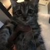 おとなしめのキジ猫女の子 誕生日01/04 サムネイル3