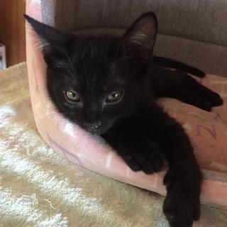 きょうだいで保護!黒猫モロくん