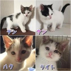 保護猫の譲渡会 名張市