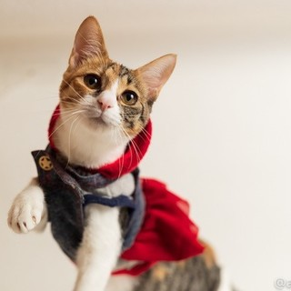 元気で懐こい 三毛猫のネルちゃん ♪