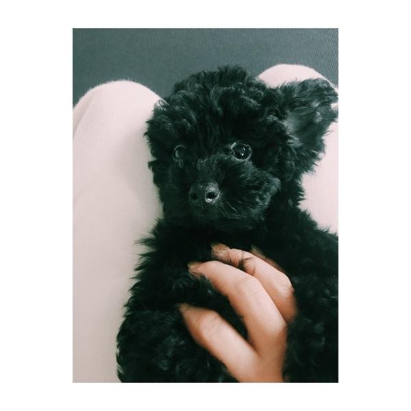 プードル 虎太郎 トイ 中型犬に昇格? 10ヶ月で巨大化したトイプードルがTwitterで話題
