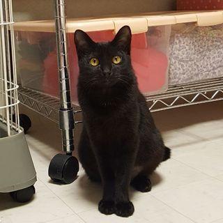 黒猫「くろみちゃん」7ヶ月