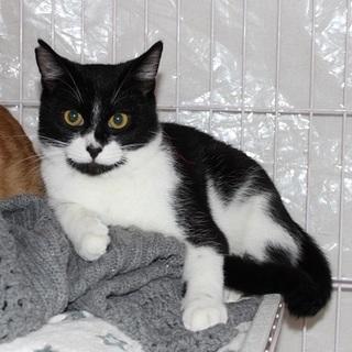 名古屋から白黒猫の里親さん募集