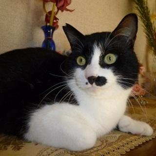 人が大好きな甘えん坊の可愛い猫!