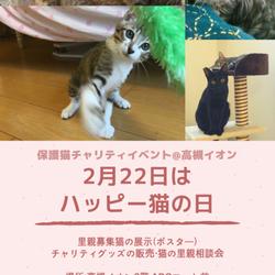 保護猫チャリティイベント@高槻イオン 2月22日はハッピーねこの日! サムネイル1