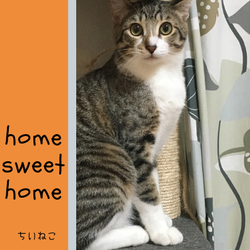 保護猫チャリティイベント@高槻イオン 2月22日はハッピーねこの日! サムネイル3