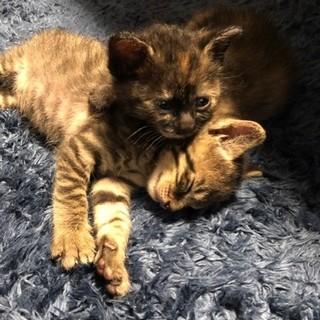 2か月前の子猫たちです。