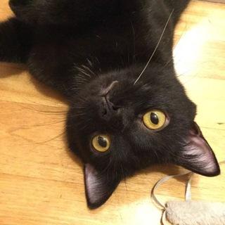 鼻の穴が魅力!コケティッシュ顔の明るく気のいい若猫