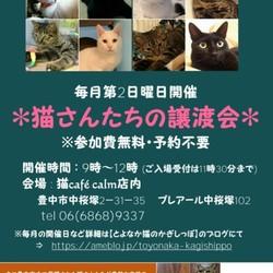 ◎大阪府豊中市・2019年2月10日(日)猫さんたちの譲渡会開催◎