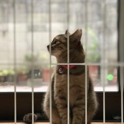 猫は内〜!