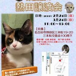 保護猫の熱田譲渡会☆個人保護主共催