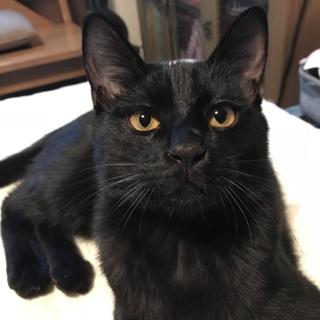 甘えん坊で可愛い黒猫くん