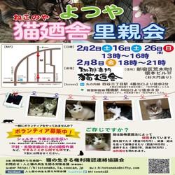 2月16日(土) 四谷猫廼舎 里親会(ボランティア募集中)