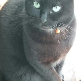 幸せの黒猫グリシャ
