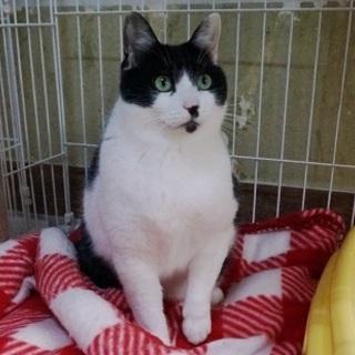 ゲージ生活4年エイズ猫 1匹飼い希望